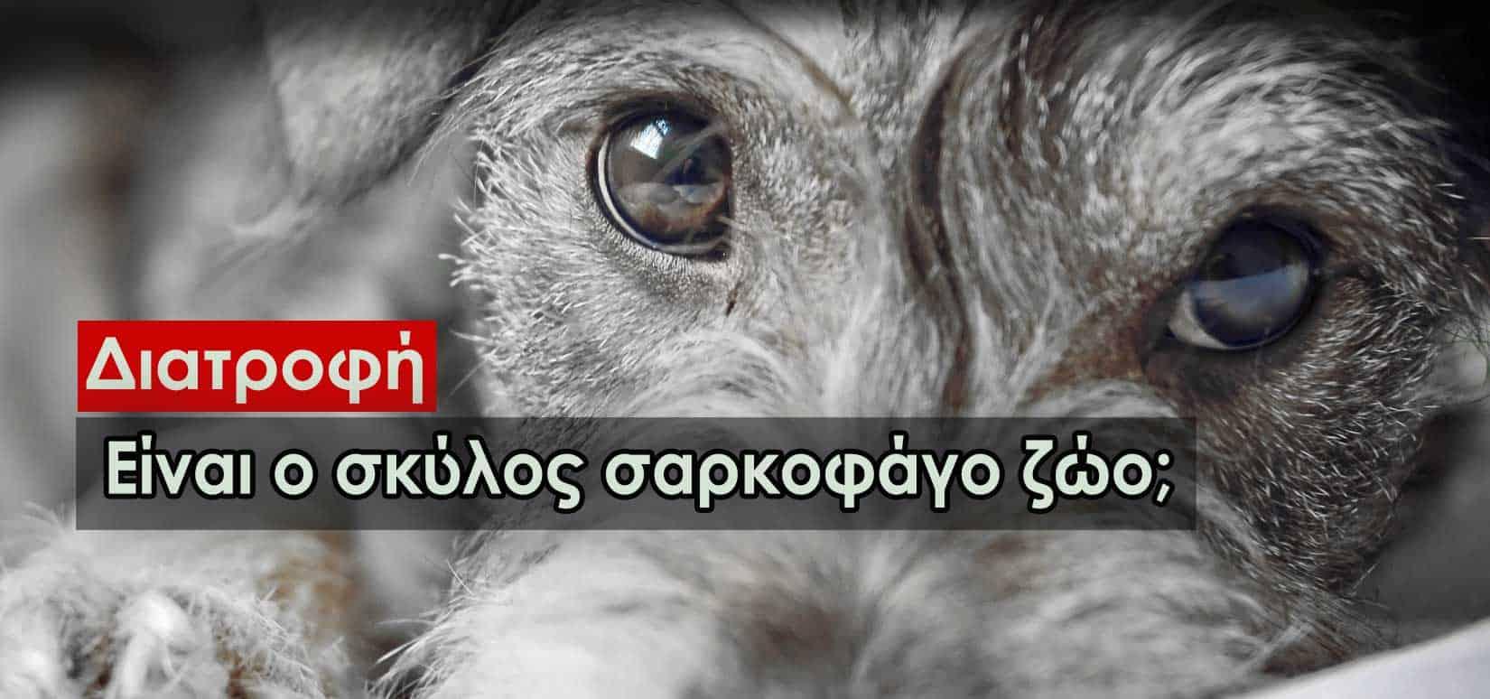 Είναι ο σκύλος σαρκοφάγο ζώο; Η διατροφή του μέσα από την εξέλιξη του σε κατοικίδιο