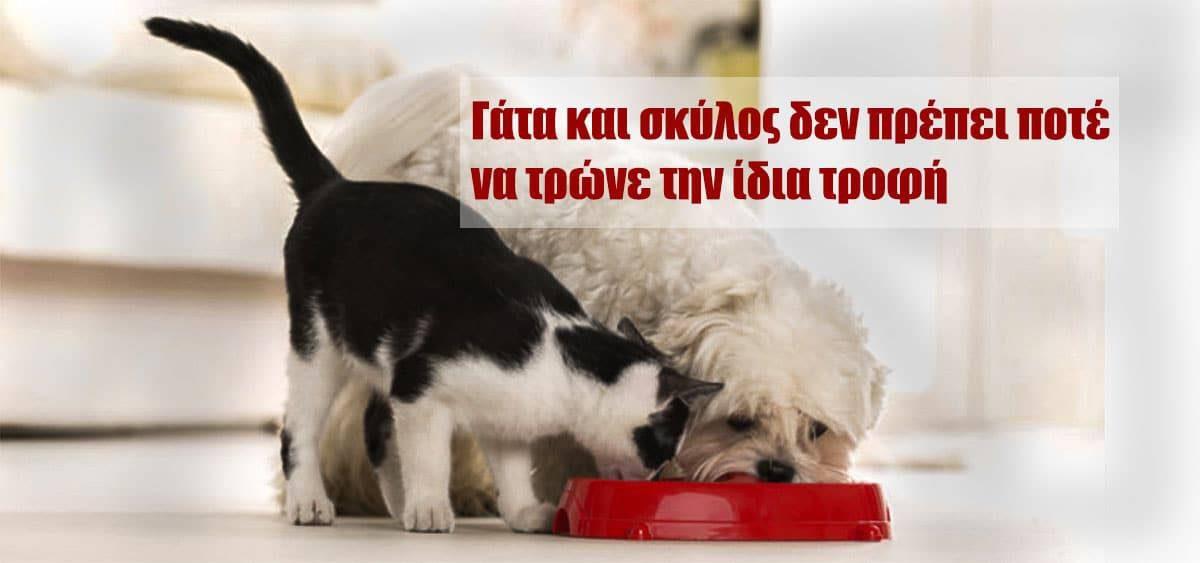 Γάτα και σκύλος δεν πρέπει ποτέ να τρώνε την ίδια τροφή